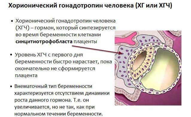 Анализ ХГЧ: сдача крови для проведения теста на беременность, определение онкологических заболеваний