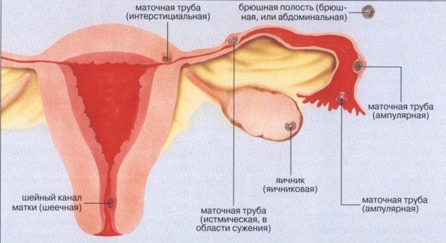 Особенности маточного кровотечения и его опасность