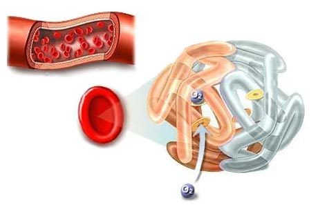 Норма гемоглобина в крови у женщин после 50 лет: таблица