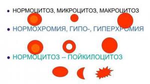 Пойкилоцитоз: причины появления в общем анализе крови, лечение