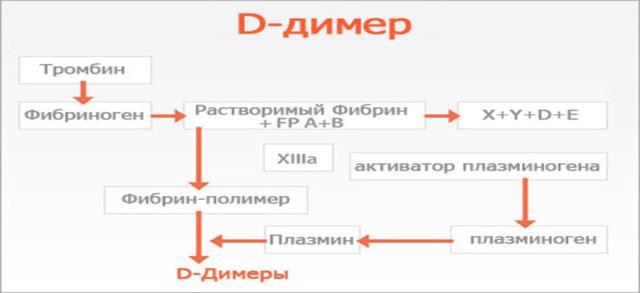 d-димер: что это, нормы, причины отклонений, показания для анализа