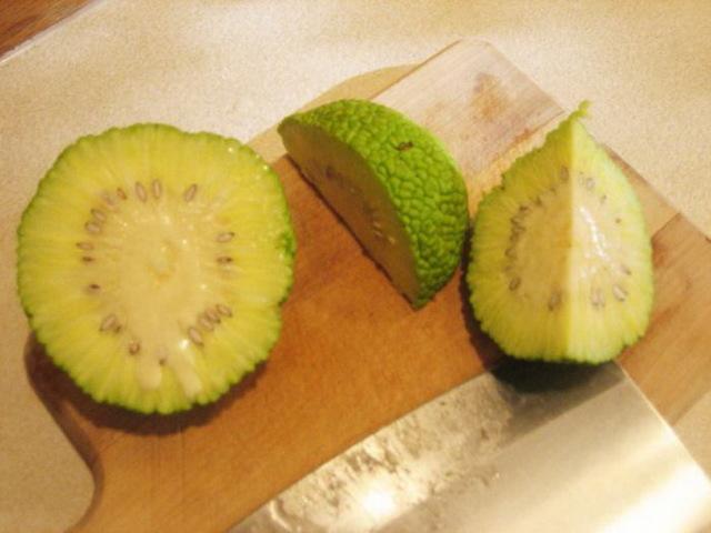 Адамово яблоко при варикозе вен на ногах: применение, лечение, отзывы