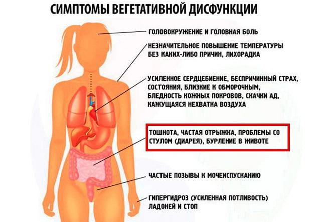 Вегетативная дисфункция: симптомы и лечение у взрослых, механизмы нарушения работы ВНС