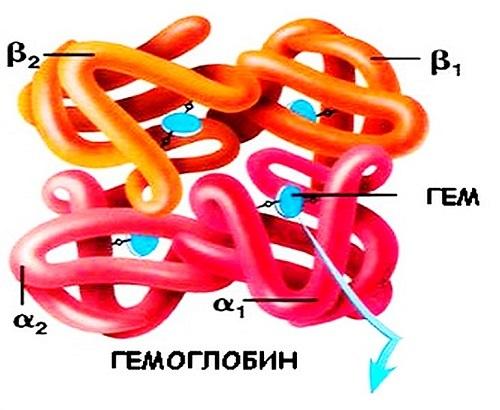 Норма гемоглобина в крови у мужчин: таблица по возрасту