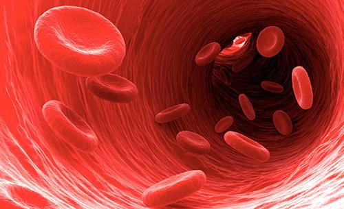 Понижены сегментоядерные нейтрофилы: показатели нормы, причины снижения, лечение и прогноз