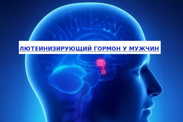 ЛГ гормон: норма у женщин и мужчин, за что отвечает, как корректировать низкий и высокий уровень
