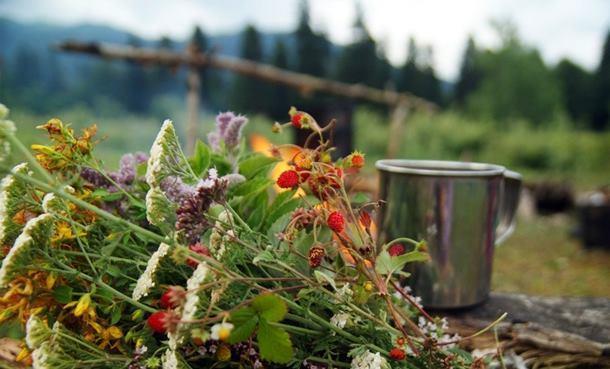 Травы, понижающие давление и улучшающие работу сосудов