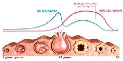 Анализ крови на прогестерон: показания, как и когда сдавать, подготовка, нормы и расшифровка