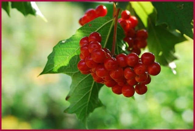 Самые полезные ягоды при повышенном давлении