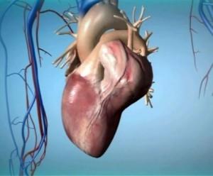 Рак сердца: причины, симптомы и признаки, лечение и прогноз