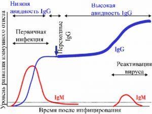 Положительный результат на цитомегаловирус igg: что означает этот результат анализа