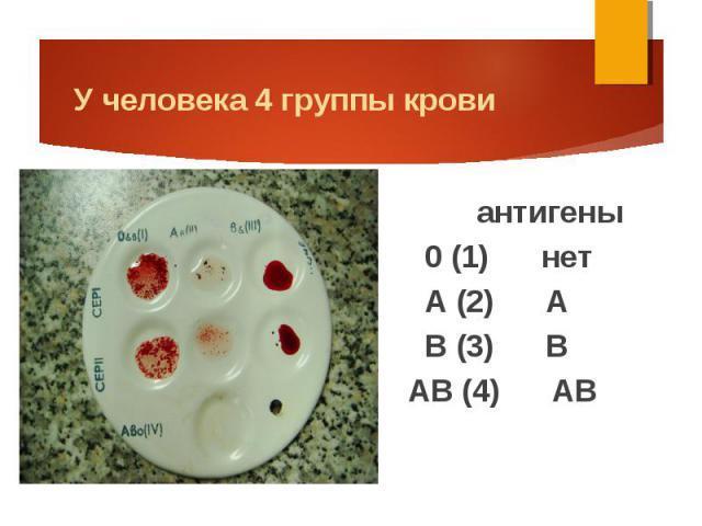Первая группа крови положительная: что это, характеристика, резус положительный, совместимость