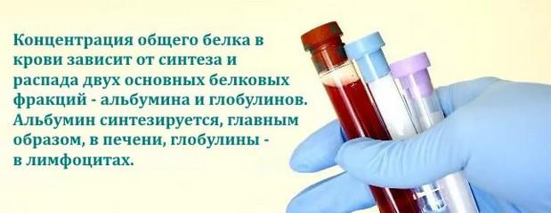 Белок в крови: норма, причины отклонений, что это значит, подготовка