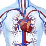 Как пить цикорий при повышенном сахаре в крови, отзывы