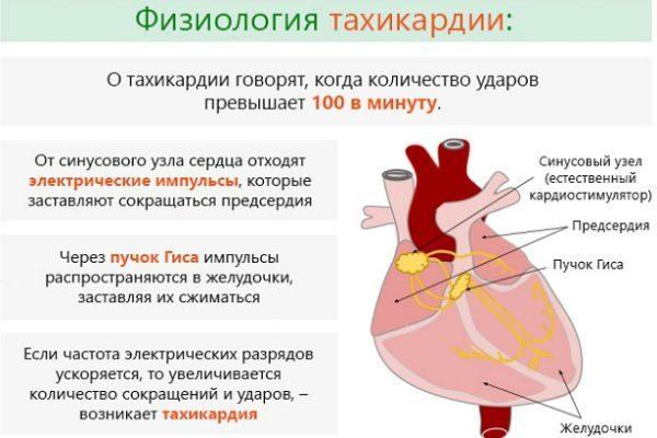 Полезные советы тем, у кого выявлена тахикардия